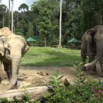 Watch Porn Stream Online – ATKGirlfriends presents Jill Kassidy in Virtual Vacation Singapore to Malaysia 2_5 (MP4, UltraHD/4K, 3840×2160)